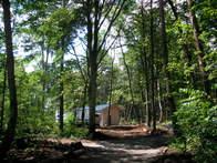 calmforest01.jpg